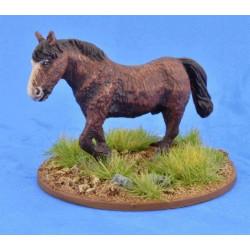 Shaggy Pony (Bareback)