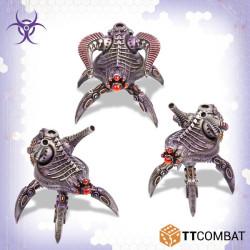Stalker Beetles